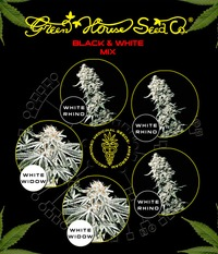 Green House Seeds Black & White Mix