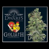 The-7-dwarf-seeds-goliath