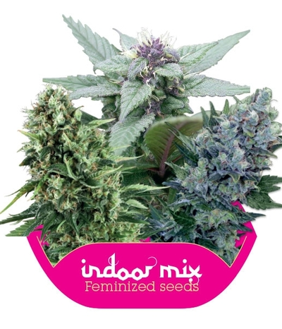 INDOOR MIX Fem