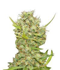 Barney's Farm Pineapple Chunk