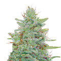 Barney-s-farm-red-diesel