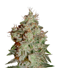 Green House Seeds Lemon Skunk