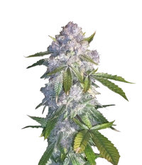 Reserva Privada Purple Wreck