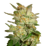 World-of-seeds-star-47