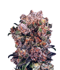 Dutch Passion Blueberry Reg