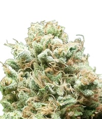 DNA Genetics 91 Krypt