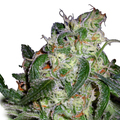 Dna-genetics-la-cannalope
