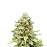 Dinafem-critical-mass-cbd