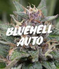 Medical Seeds Blue Hell Auto