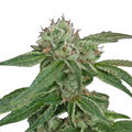 Crockett-family-farms-crockett-s-confidential