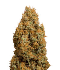 Humboldt Seeds Organization Green Crack CBD