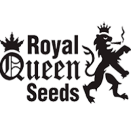 Royal Dutch Genetics