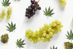 Grape_cannabis