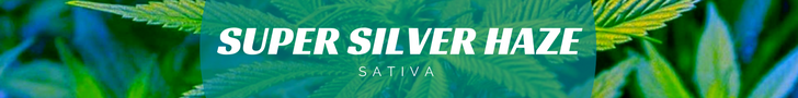 Super Silver Haze green House seeds