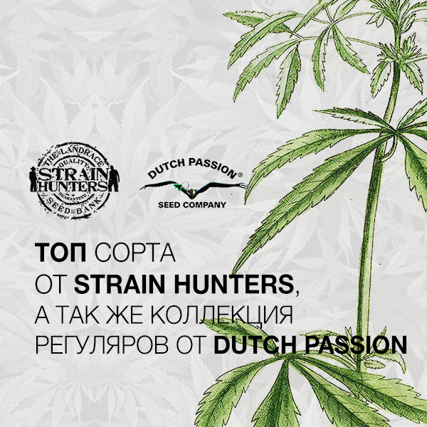 Пополнение Strain Hunters & Dutch Passion