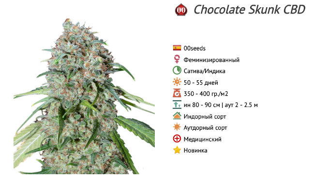 chocolate skunk cbd 00 seeds