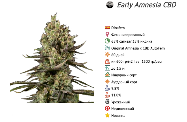 early amnesia cbd dinafem