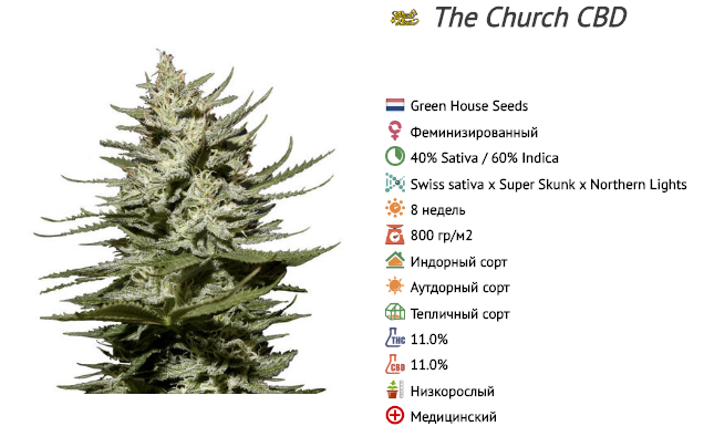 The church cbd green house seeds
