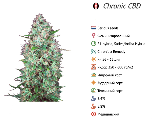 Chronic CBD